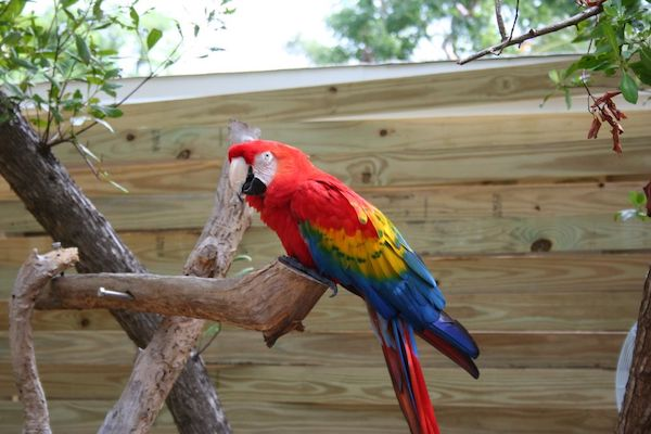 Theatre of the Seas - tropical birds - Florida Keys - Islamorada